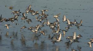 Birds at Nemours