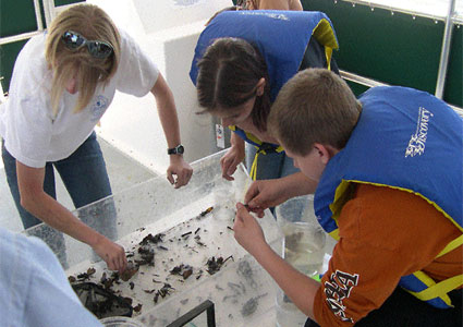 Students sort through a trawl catch as they learn about ACE Basin Rivers.